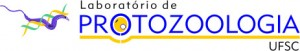 logo_proto_transparent_print_jpeg